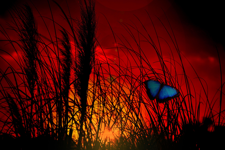 butterfly-765127