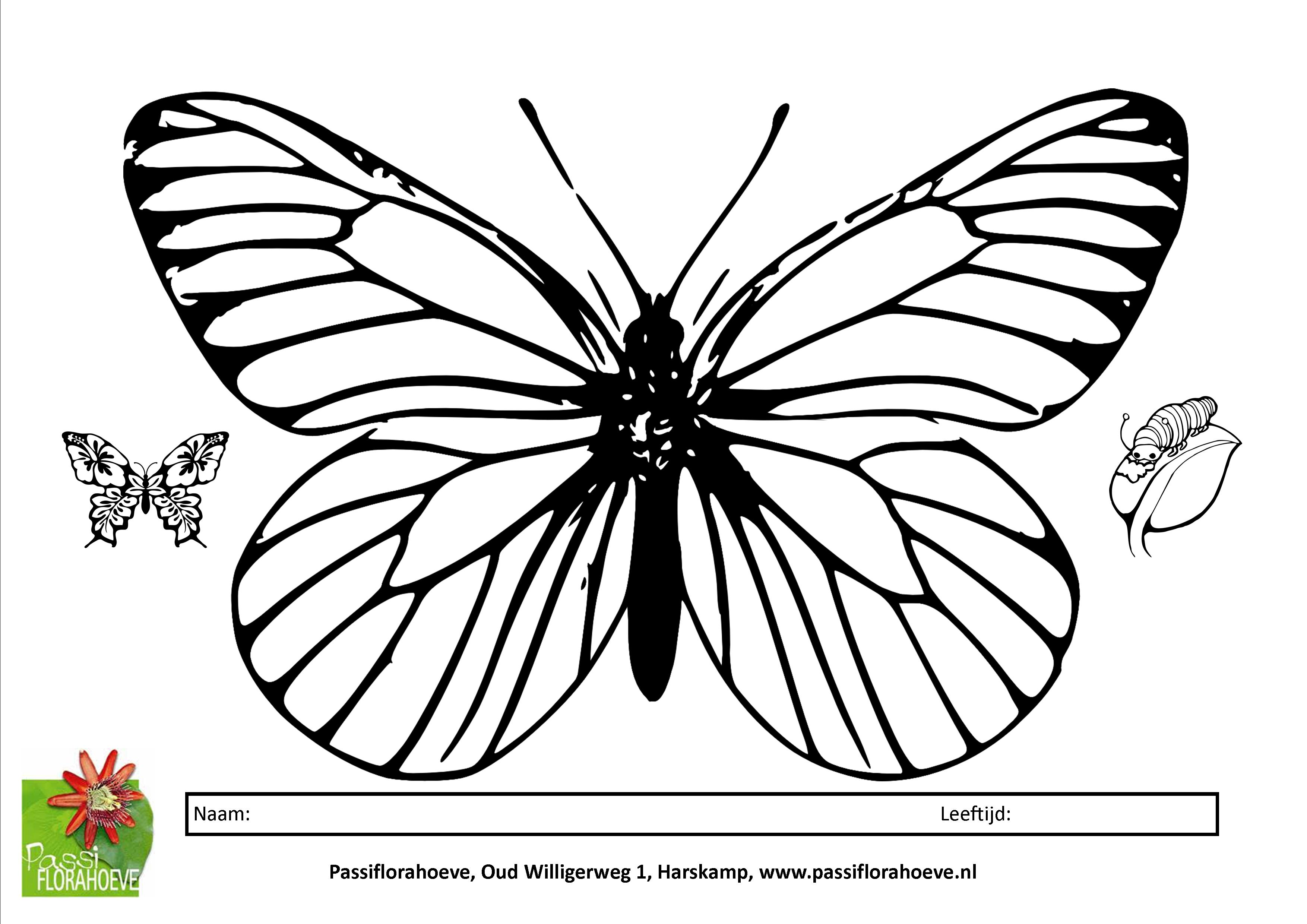 Grote Kleurplaten Vlinders.Kinderen En Vlinders Passiflorahoeve Harskamp