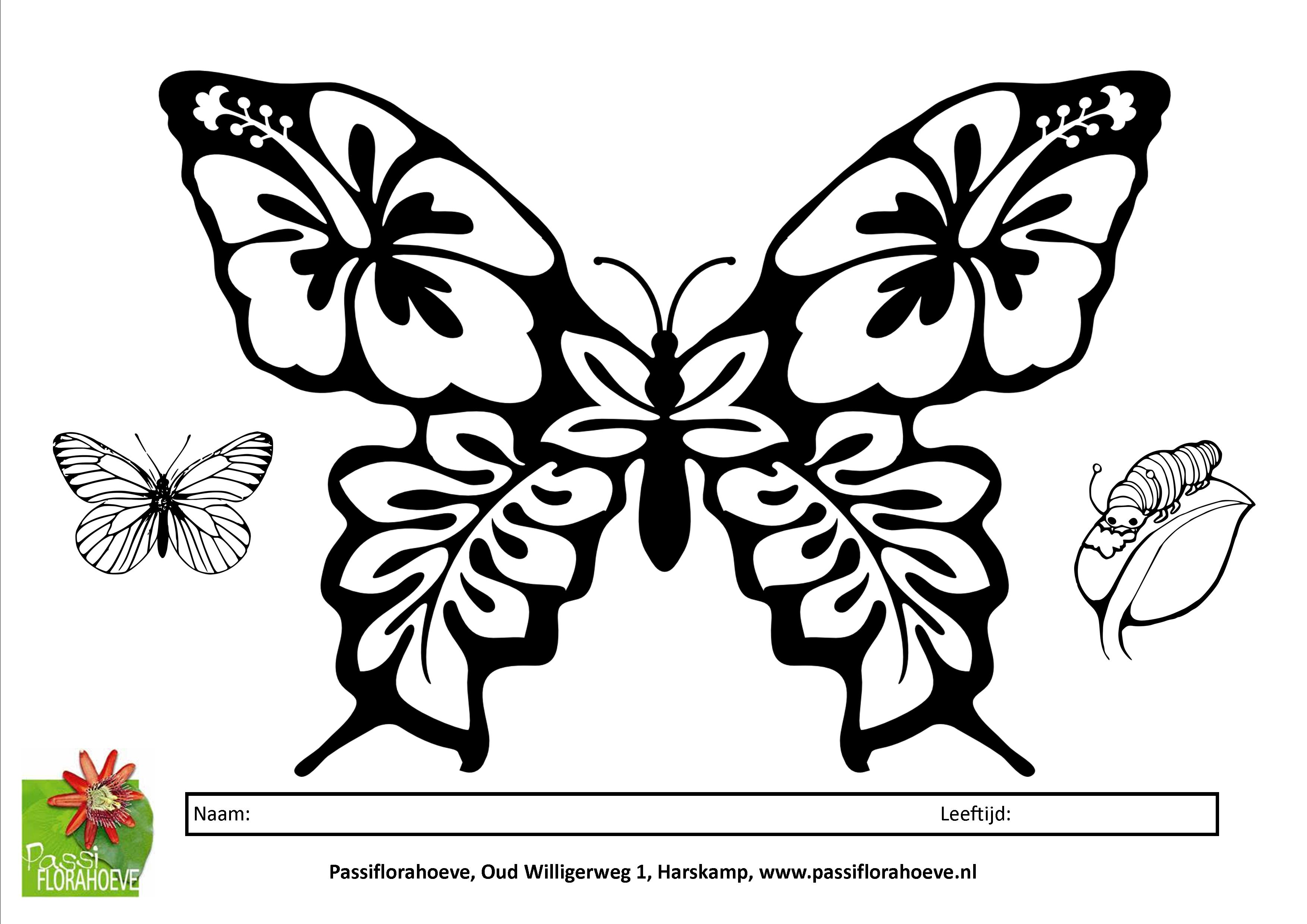 Kleurplaten Vlinders En Rupsen.Kinderen En Vlinders Passiflorahoeve Harskamp